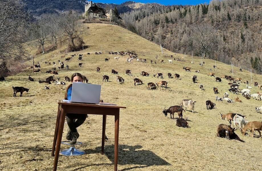 Итальянская школьница учится удаленно на пастбище в горах