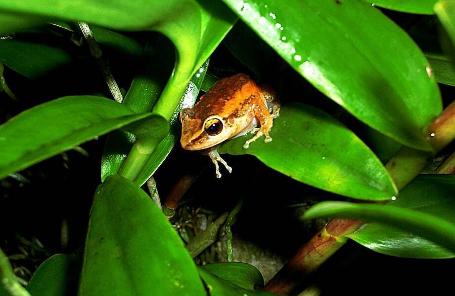 Видео: Виды живых существ, распространение которых угрожает экосистеме