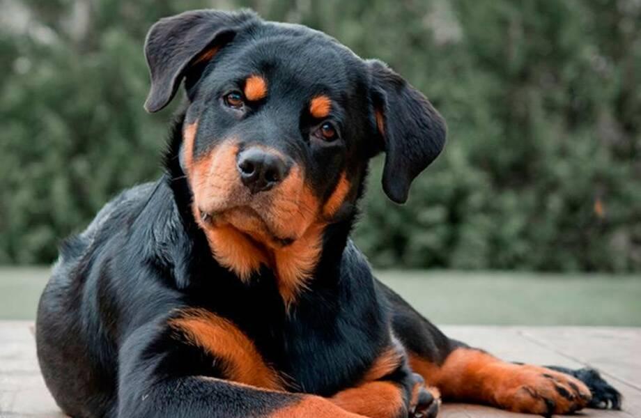 Видео: Собака демонстрирует колоссальную выдержку и самообладание
