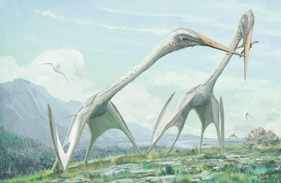 Почему шеи древних птиц были такими крепкими, и при чем здесь велосипед