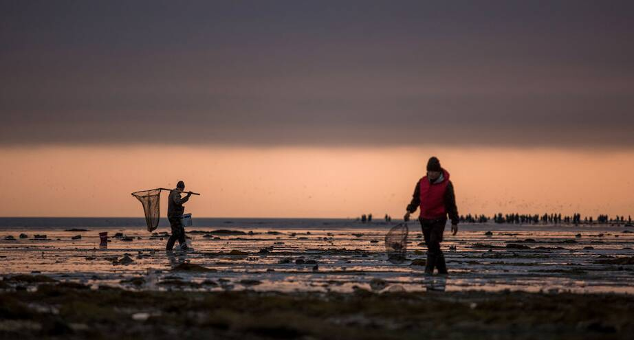 Фото дня: сбор сельди на Сахалине