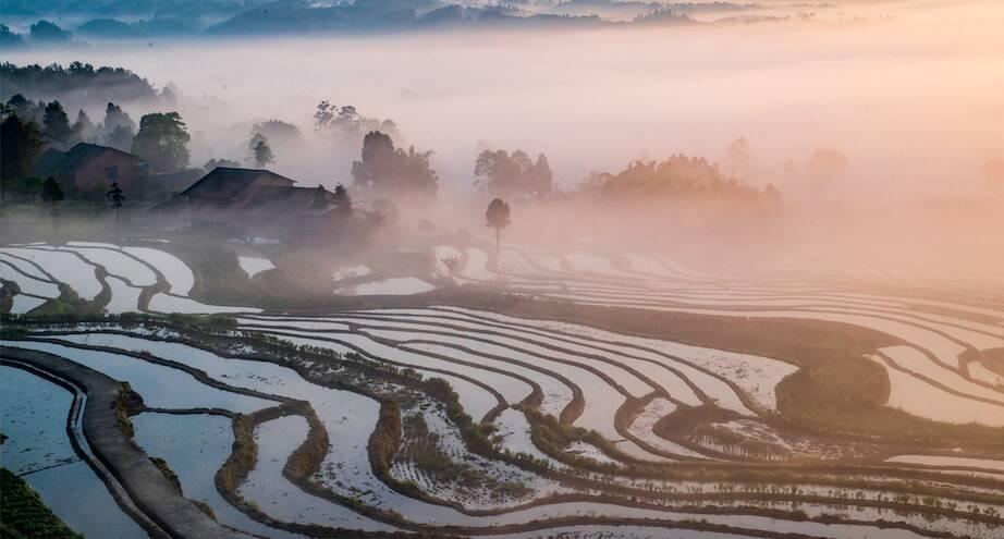 Фото дня: безмятежность рисовых полей