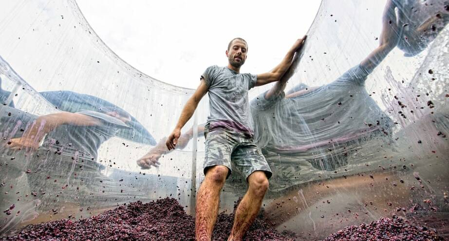 Фото дня: рабочий австралийского виноградника Hoddles Creek давит виноград