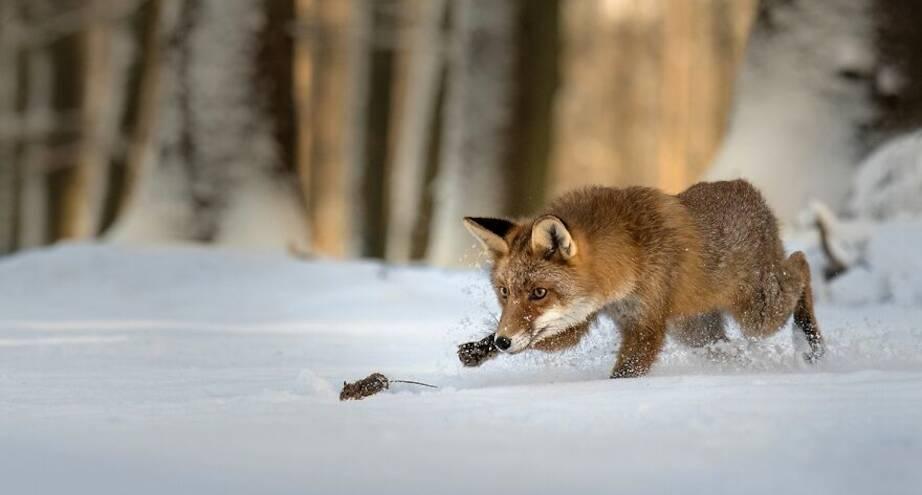 Фото дня: маленький охотник