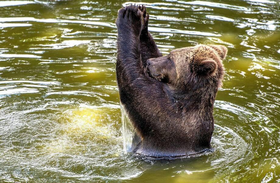 Видео: Рыбак бросился в ледяную реку, чтобы спасти маленького медведя