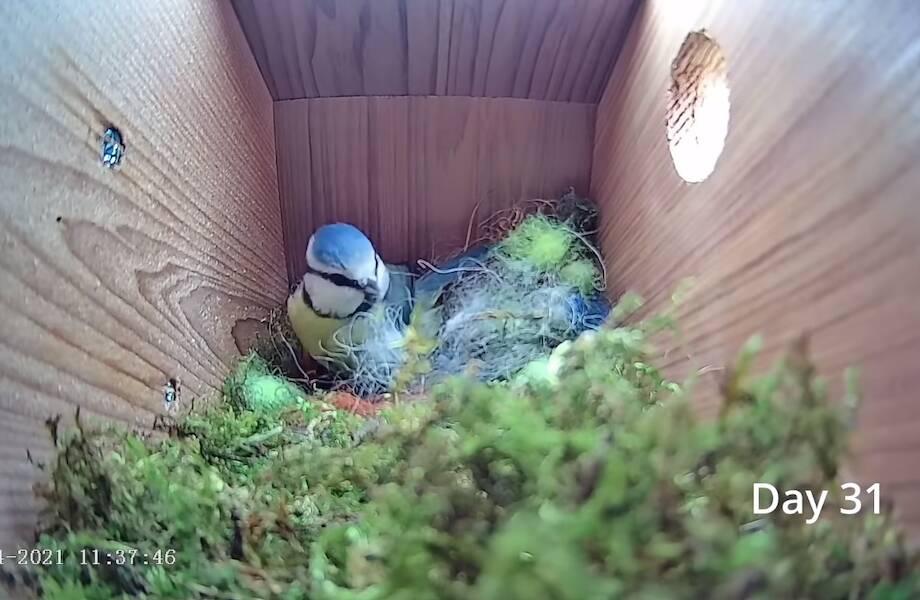 Увлекательный видеомонтаж: от пустого гнезда до первого яйца за 8 минут