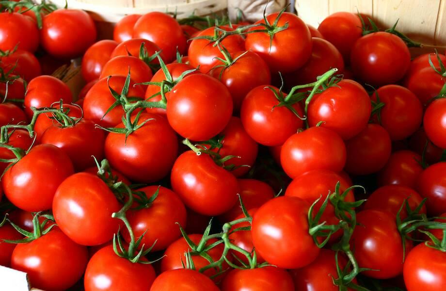 Кто придумал бросать гнилыми помидорами в выступающих