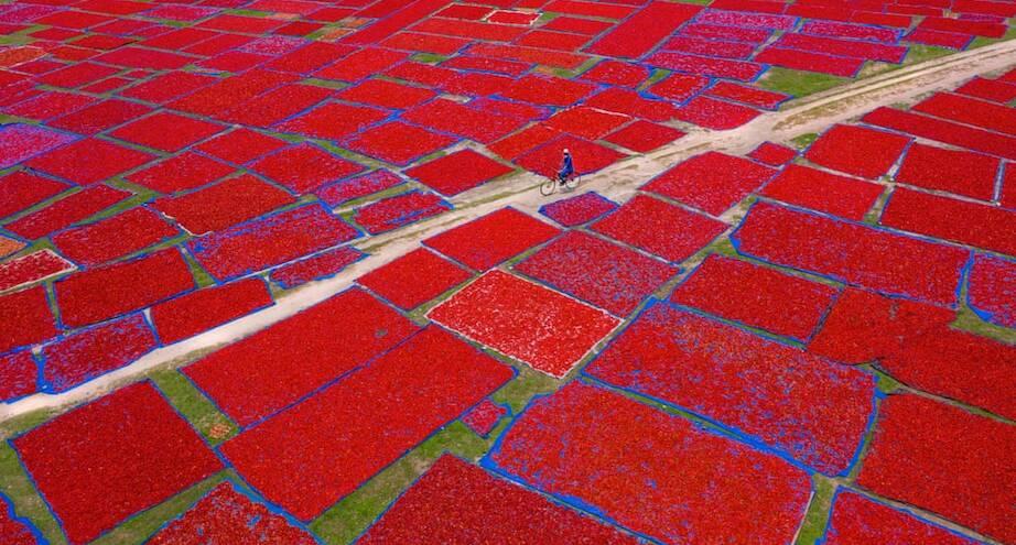 Фото дня: красное море перца чили