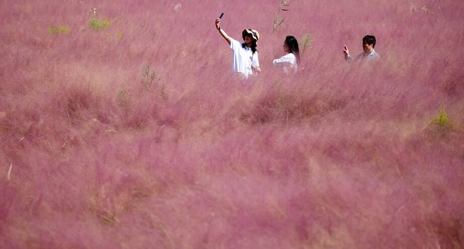 Фото дня: китайский парк в розовых облаках
